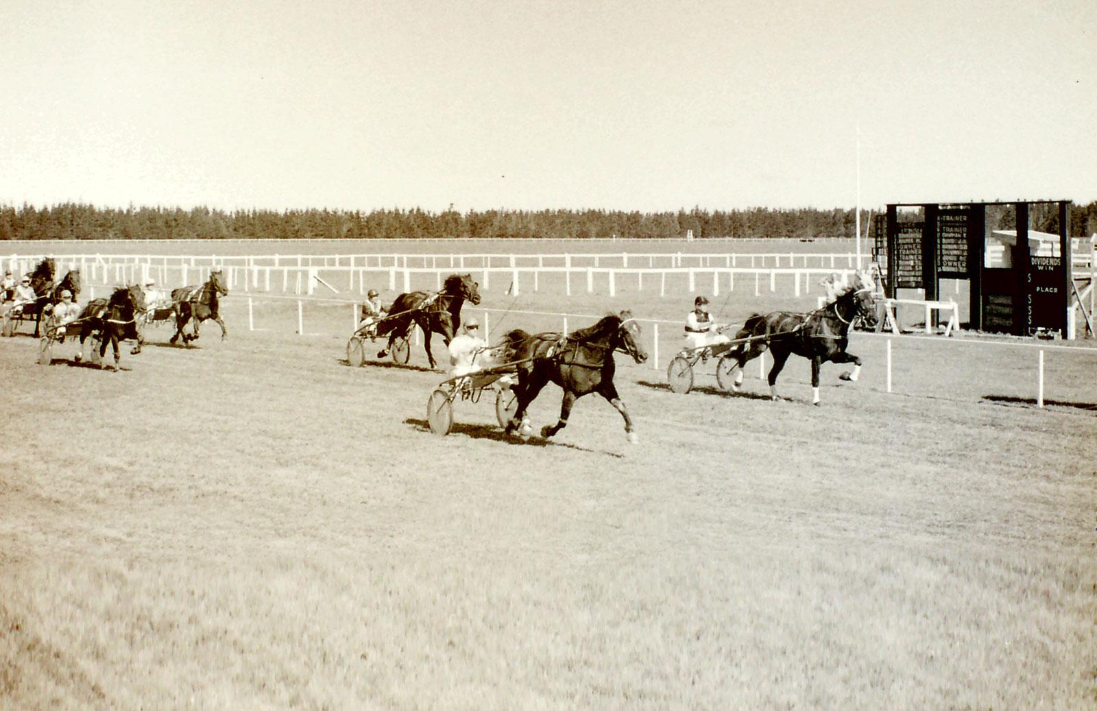 Banks Peninsula Trotting Cup 1971